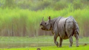 Kaziranga National Park, Assam-OSR Vacation
