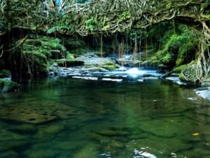 Mawlynnong, Meghalaya-OSR Vacation